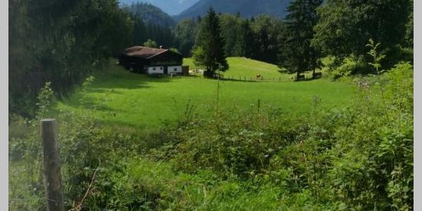 Taubensee 1
