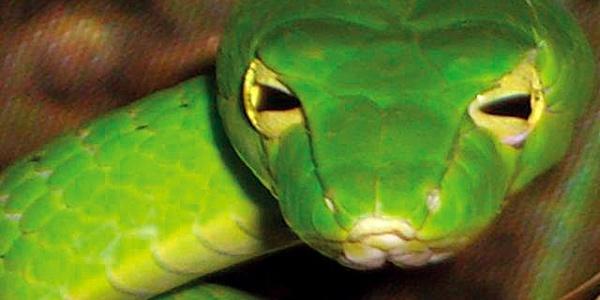 Schlange Reptilienhaus Unteruhldingen
