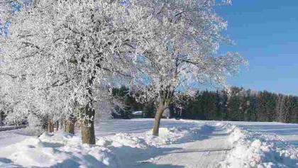 Winterwanderweg in Benneckenstein