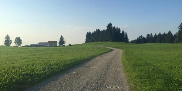 Forstweg zum Tobelrandweg
