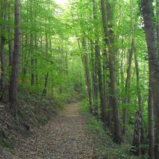 Die Tour führt uns direkt in den Naturpark Pfälzerwald.