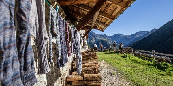 Die Alp Tavrü.