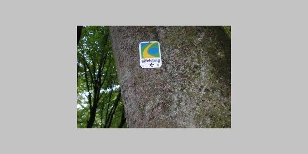 Eifelsteig Markierungspalette am Baum