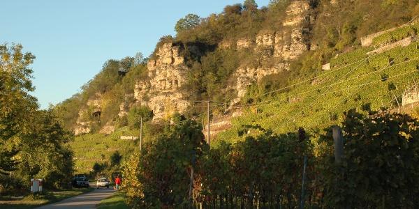 Terrassenweinberge bei Lauffen am Neckar