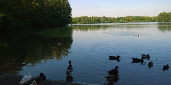 Heidesee (1) im Kirchheller Wald