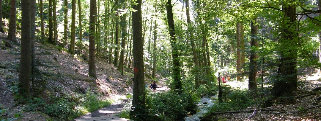 Der Wasserlehrpfad Edenkoben verläuft stets entlang des Baches bis zum Hilschweiher.
