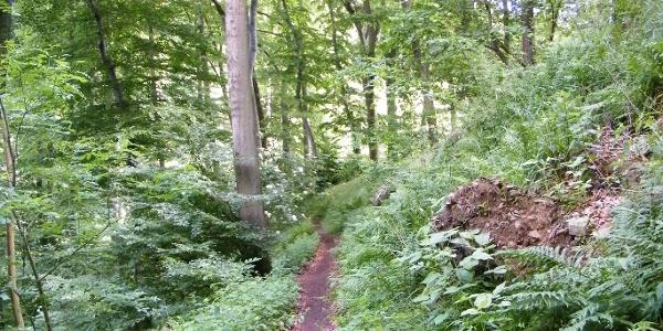 Idyllischer Pfad an den bewaldeten Hängen des Breibergs.