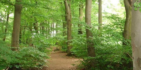 Naturnahe Wegeführung der Variante via Bethelauen