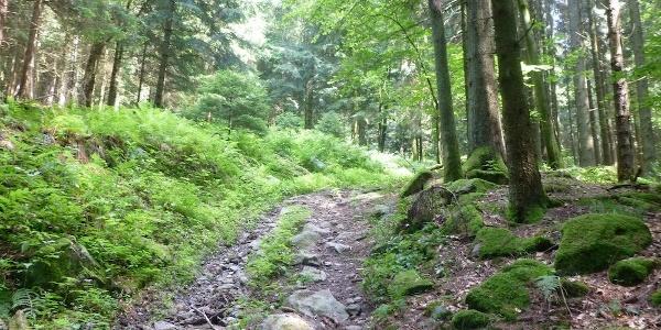 Aufstieg von Redlmühle nach Kolmberg