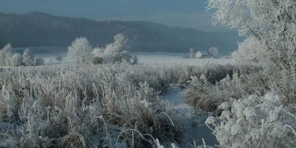 Sielmann-Weiher Winter