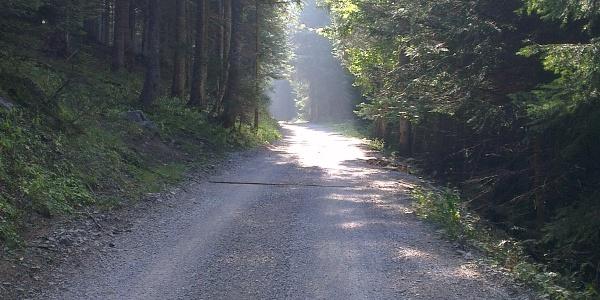 Strada forestale Meriz/Dosson.
