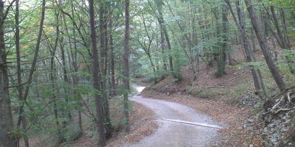 Forstweg Ranzo - Nembia