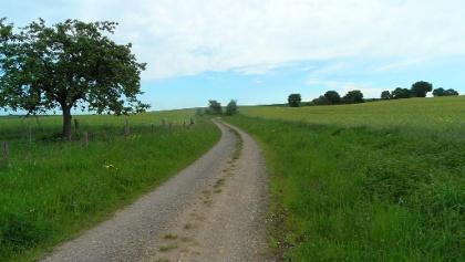 Wanderweg Richtung Hergarten