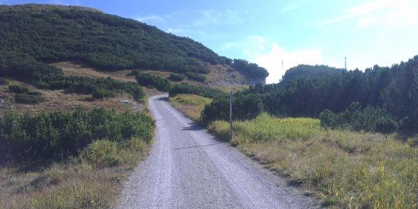 Strada forestale tra i mughi.