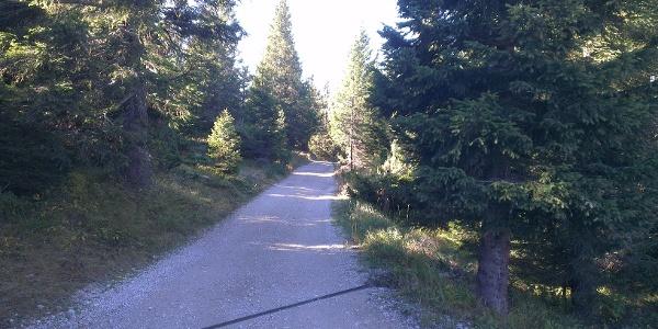 Strada forestale Doss Pelà-Bait del Germano.