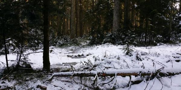 Verschneiter Winterwald bei Freudenstadt