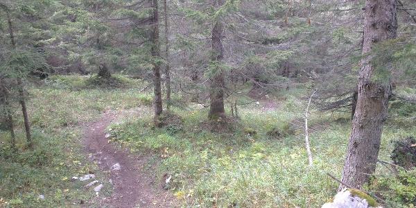 Startpunkt des Trails durch den Wald