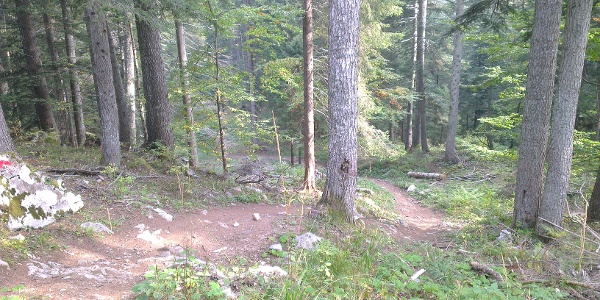 Kurven in den Wald