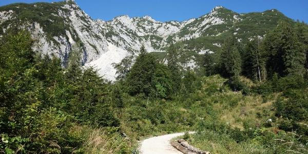 Nach der Forststraße geht's durch die steile Ostflanke