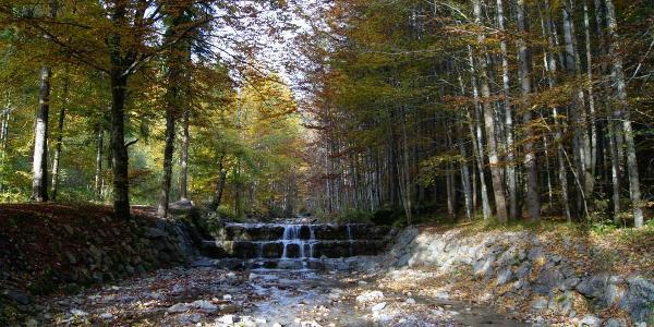 Herbstfarben am Deiningbach