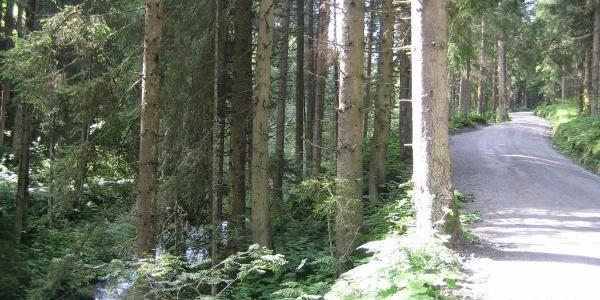 entlang des Voldertalbaches