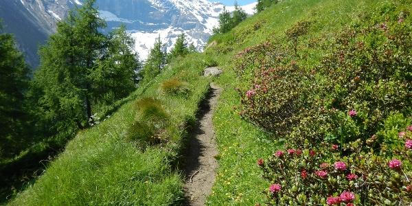 Aufstieg zur Gleiwitzer Hütte