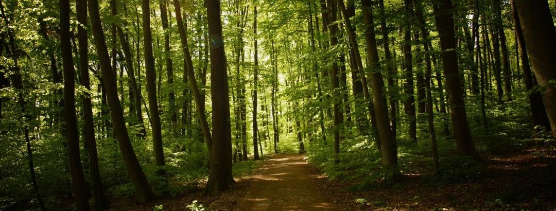 Wanderweg durch schattigen Wald in der Weltenburger Enge