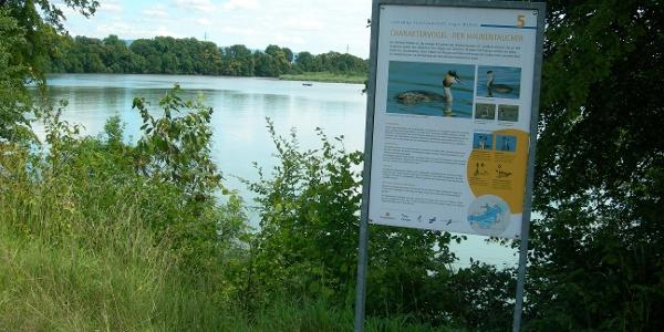 Wasservögel am Naturschutzgebiet Althein