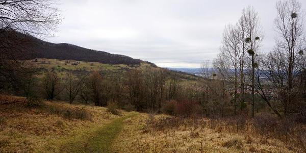 Pfad zur Ruine Hahnenkamm und auf den Breitenstein