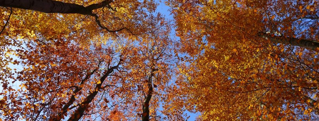 Herbstliche Buchenwaldherrlichkeit am Troppberg