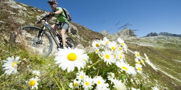 Luterensee-Bike-Tour: Mitten durch die schönsten Alpweiden