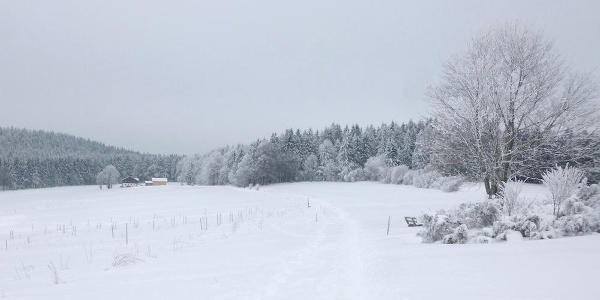 Beginn bei Ahornwies - rechts Wacholderheide