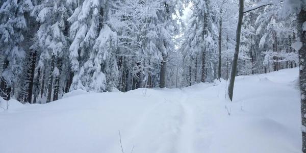 Abkürzung beim Chamer Hüttenweg