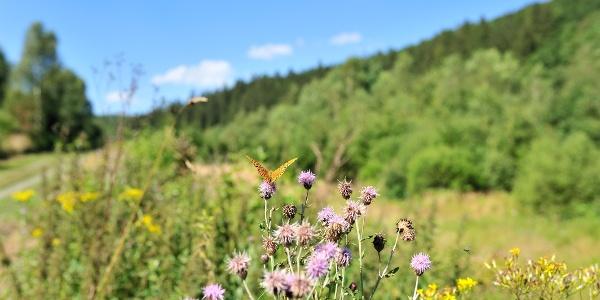 De vlindervallei Schönberg
