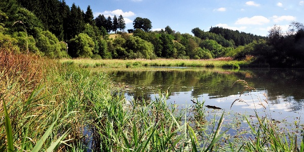 Still ruht der See Bütgenbach