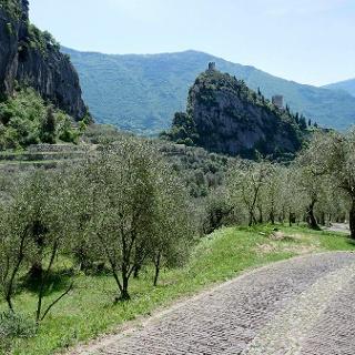 Il Castello e l'olivaia di Arco