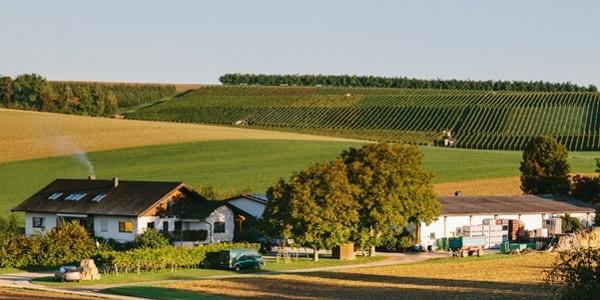 Weingut Golter Ilsfeld