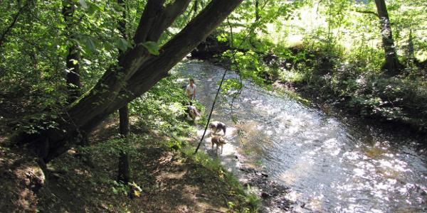 Eine Hundebadestelle vor Fränkies Hütte. Etwas weiter rechts könnte man auch selber schwimmen.