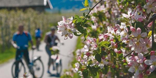Bike Bolzano