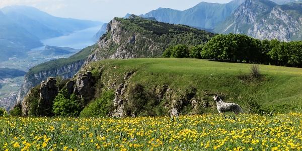 Monte Casale