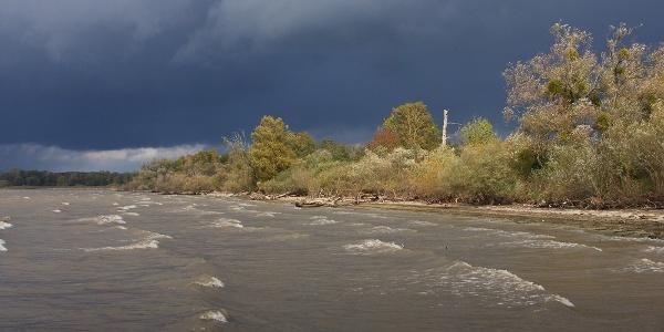 Herbstliches Ufer des Eriskircher Rieds