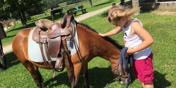 Il centro equitazione di Andalo