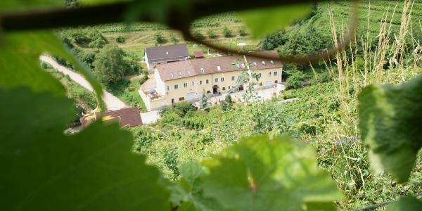 Weinbau Weidenauer