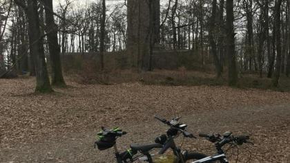 Potzbergturm umringt von Bäumen