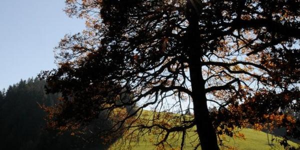 Wiesen und Wald – typische Landschaft am Pfänder.