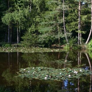Naturschutzgebiet Moobachtal