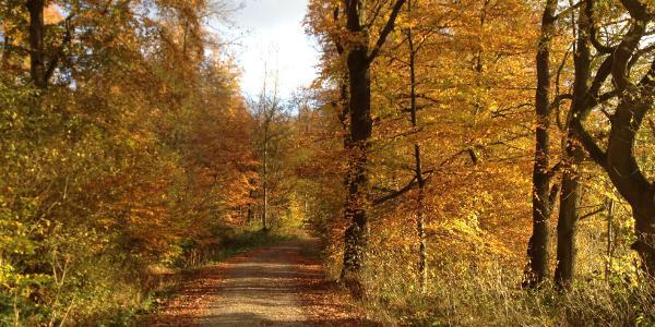 Am Waldrand entlang Richtung Schraubeweg