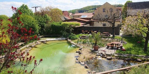 Zum Abschluss noch ein Sonnenbad und Frühlingsgezwitzscher am Schwimmteich