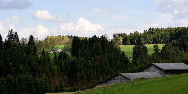 Friesenhof-Wanderweg