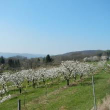 Kirschbaumflächen zu beginn der Tour.